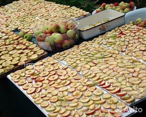Сушеные яблоки купить в Саратовской области на Avito - Объявления на сайте Avito