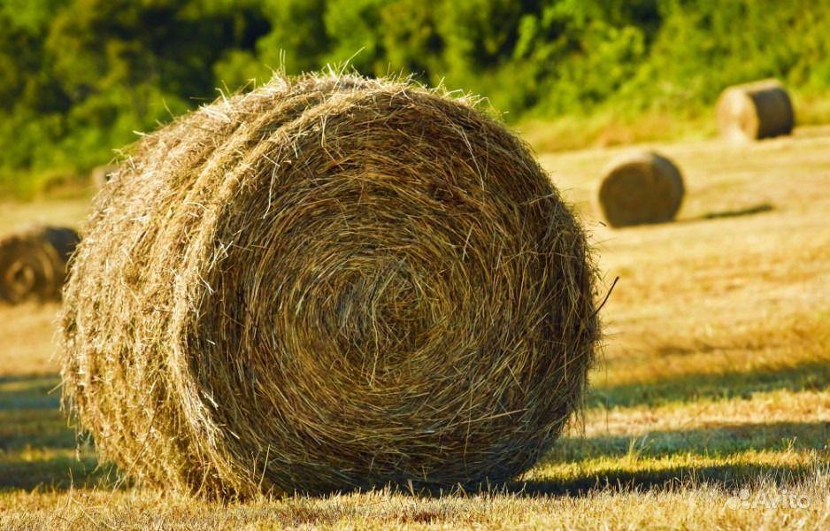 Рулоны сено