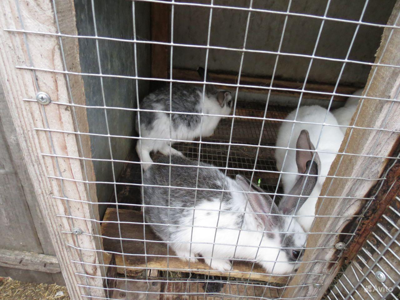 Кролики в Красноярске - фотография № 2