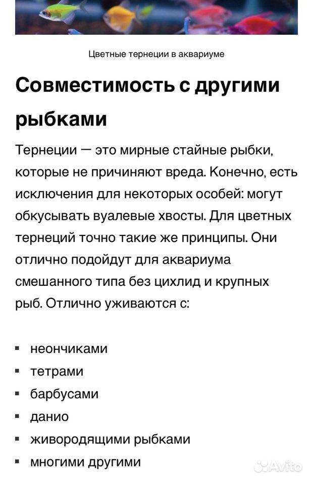Рыбки тернеции купить на Зозу.ру - фотография № 2