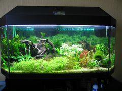Изготовим аквариумы по вашим размерам