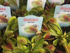 Авито в омске бесплатные объявления цветы и растения из рук в руки