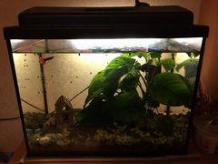 Аквариум с рыбками и растением