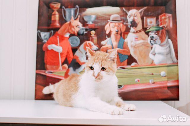 Кошка в добрые руки 3e41f69bdd5f9