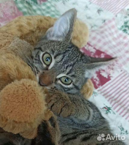 Котенок-подросток, 4 месяца  89047606853 купить 1