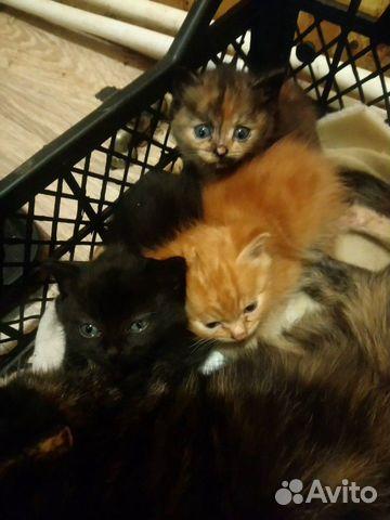 Кошка  89091702755 купить 1