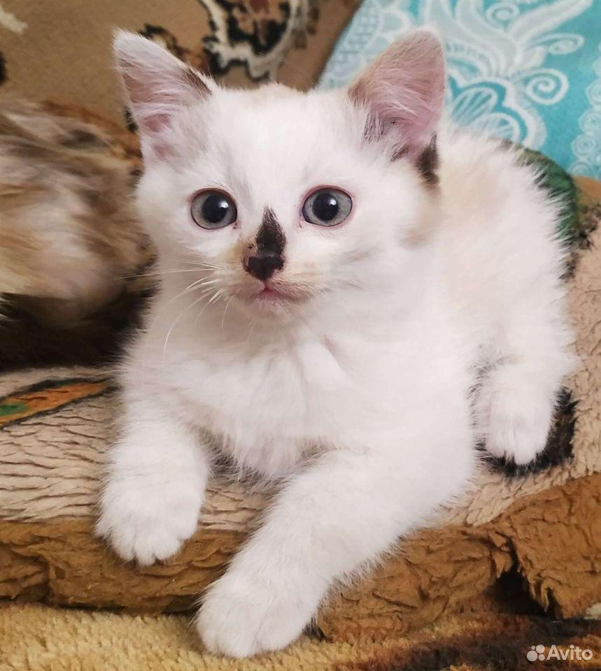 Кошка  89027334792 купить 1