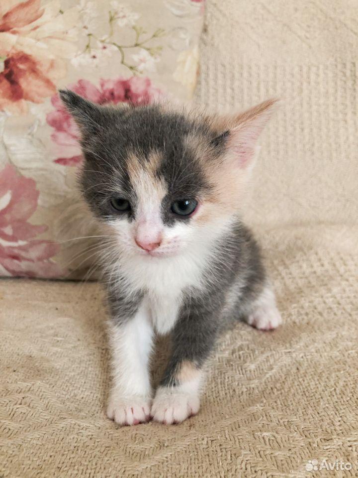 Котенок  89201002908 купить 2