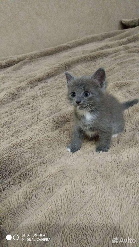 Кошка  89051634220 купить 5