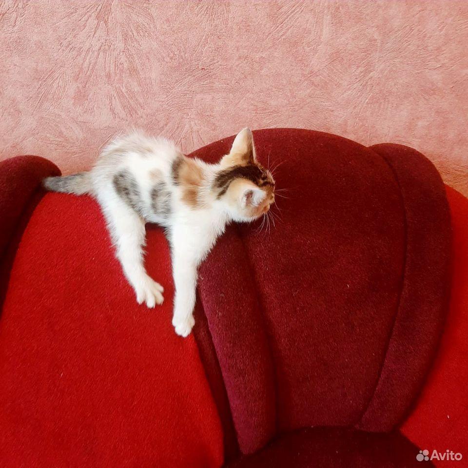 Give kitten in good hands  89379140006 buy 5