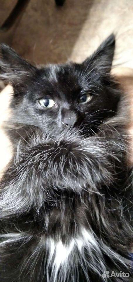 Кошка  89029455536 купить 5