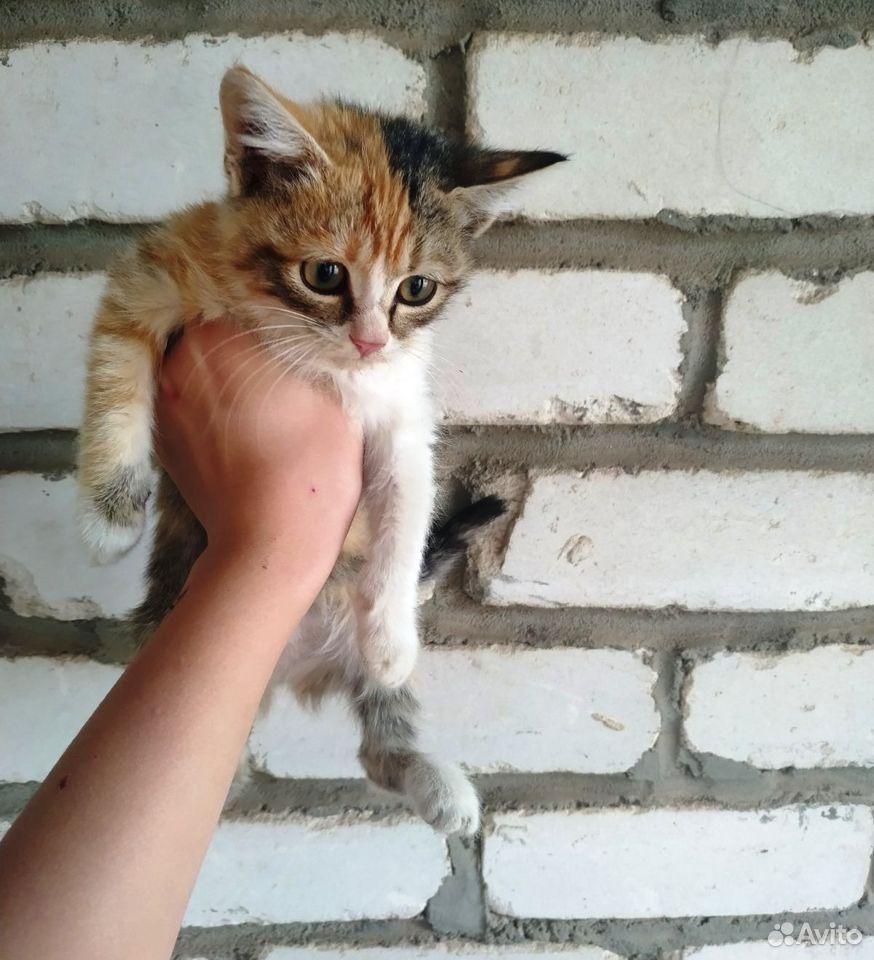 Отдам котят  89054008175 купить 2