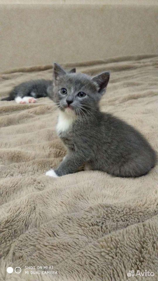 Кошка  89051634220 купить 3