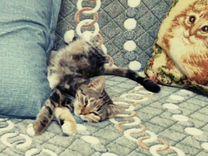 Трёхцветное счастье :) — Кошки в Геленджике