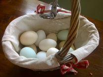 Яйца куриц породы Ухейилюй для инкубатора