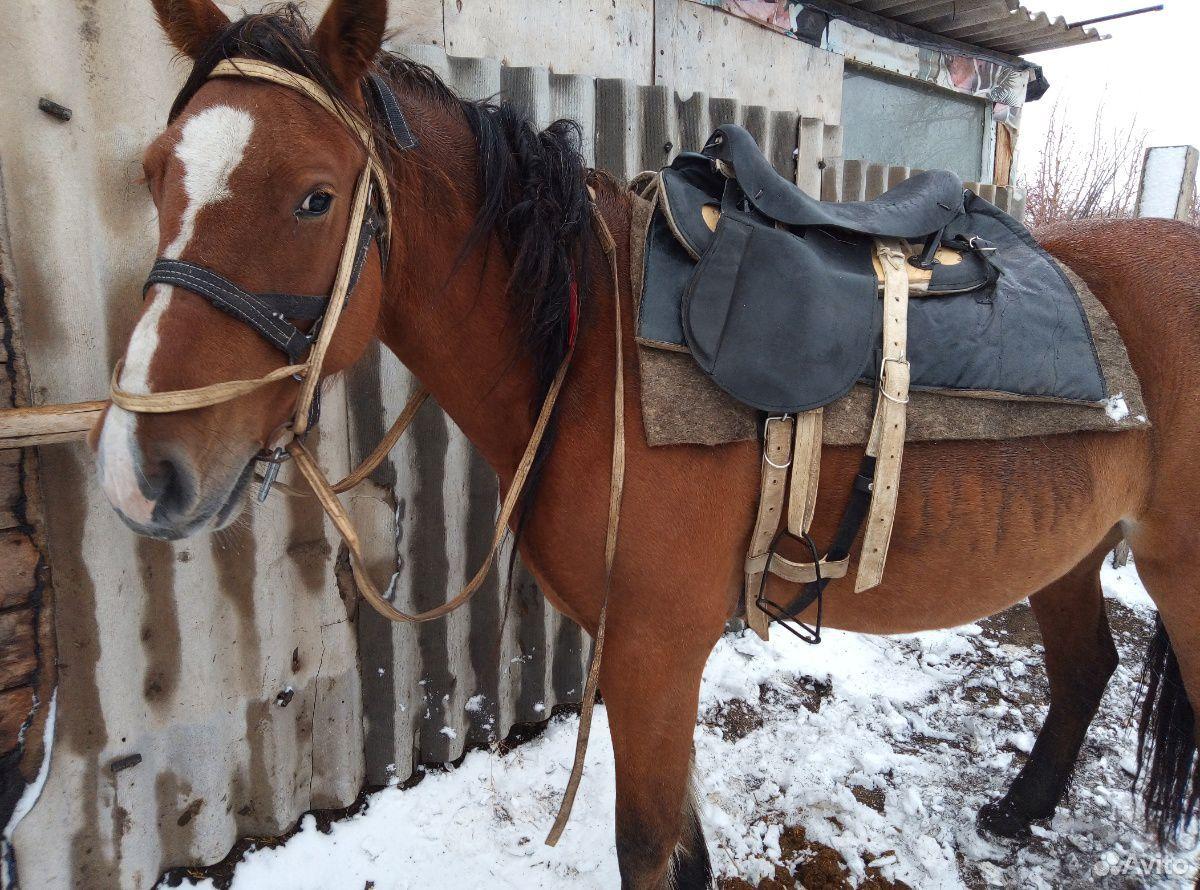 Лошадь  89236928993 купить 5