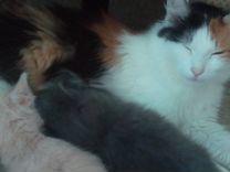 Котятки 2 месяца девочка мальчик