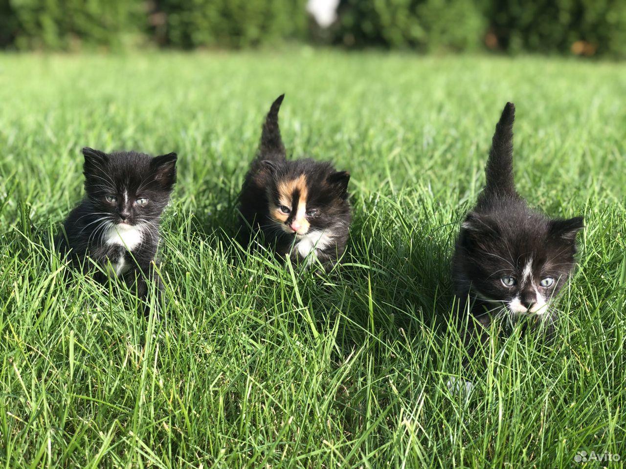 Котята в добрые руки бесплатно  89118513410 купить 1