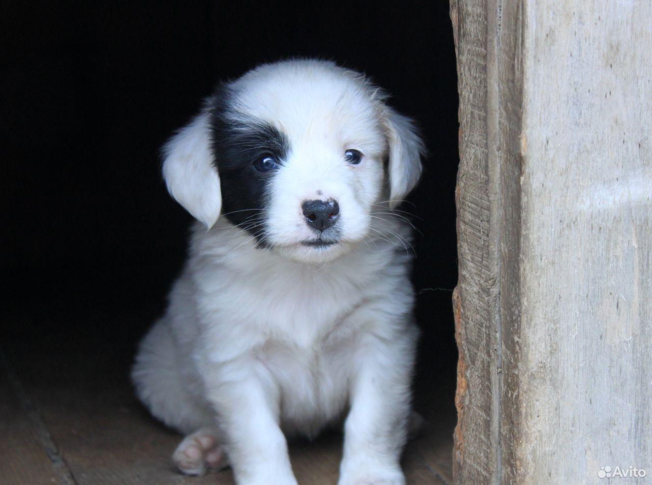 Отдадим щенков в добрые руки  89142105663 купить 1
