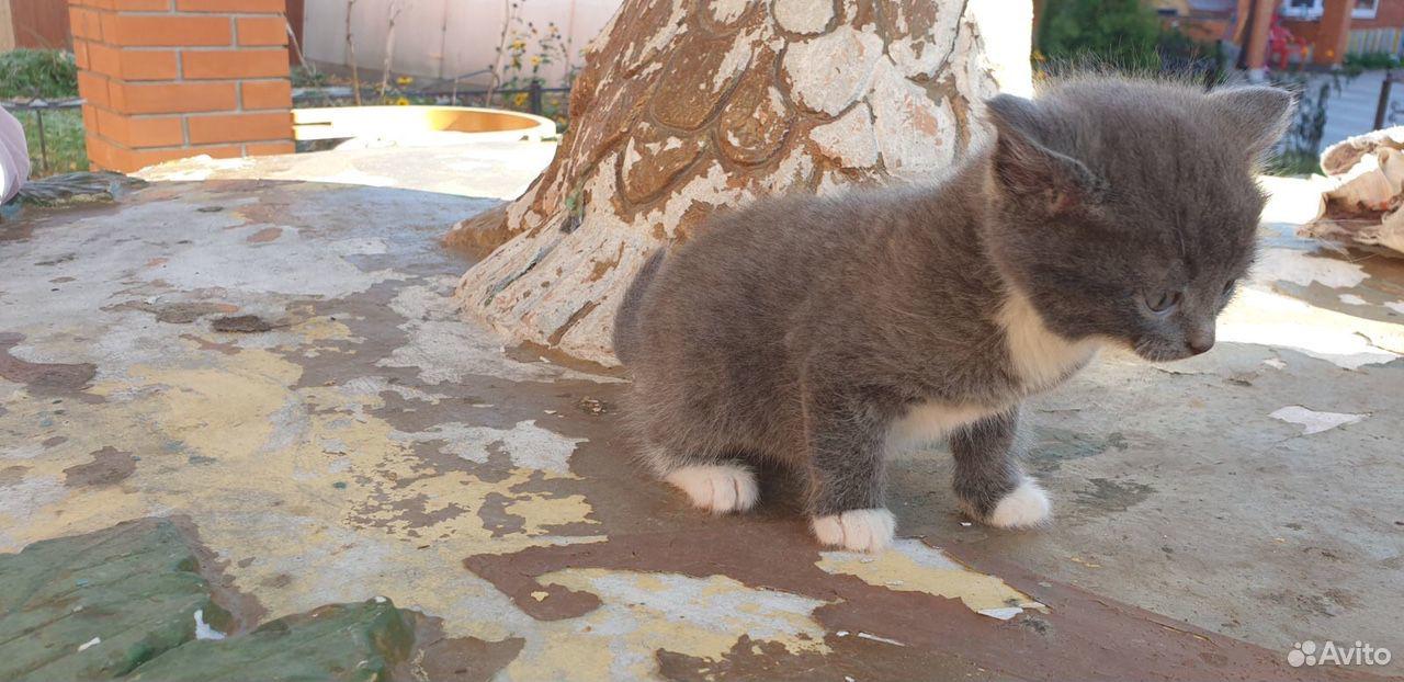 Kätzchen kostenlos in gute Hände  89292004111 kaufen 2