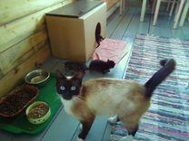 Голубоглазые котята в добрые руки