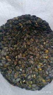 Голосемянка тыквенная - семена тыквы