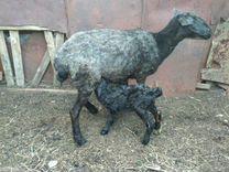 Продам овец на племя