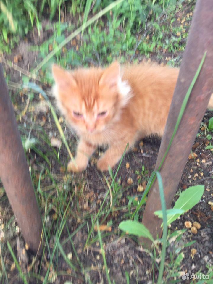 Кошка  89376692170 купить 2